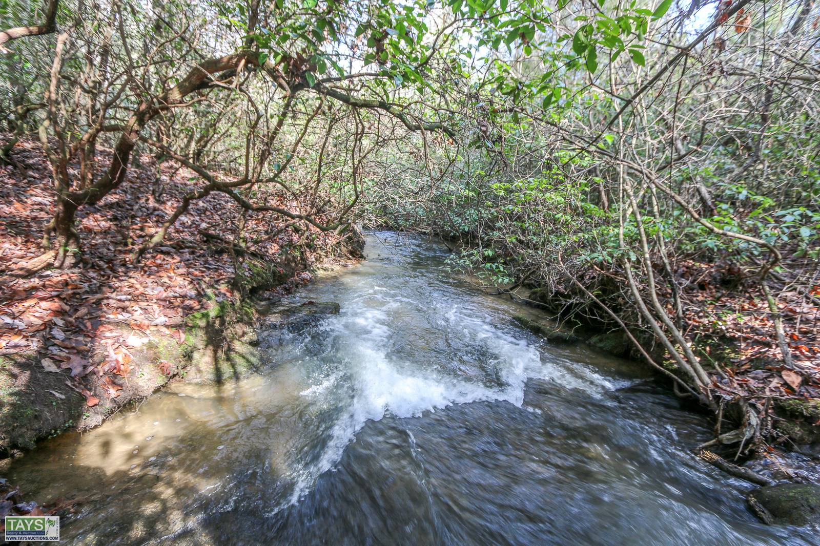 ONLINE ABSOLUTE AUCTION: 8.05 Ac± WOODED TRACT