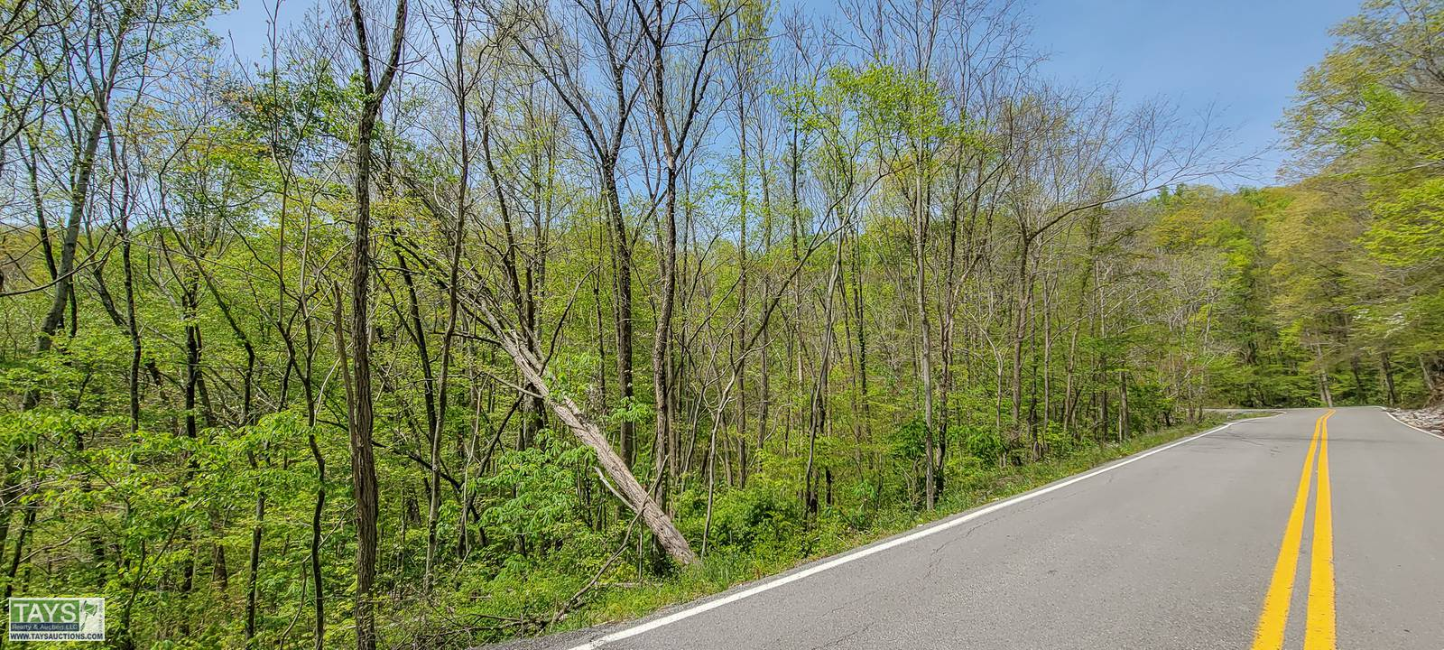ONLINE ABSOLUTE TIMBER AUCTION: 69.25 Ac± of STANDING TIMBER